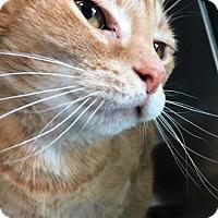 Adopt A Pet :: Stella - Monroe, MI