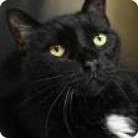 Adopt A Pet :: Hector - Aiken, SC