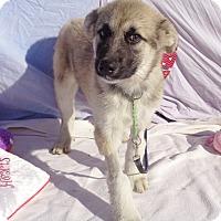Adopt A Pet :: Beautette - West Chicago, IL