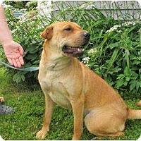 Adopt A Pet :: Sheena - Newport, VT