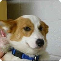 Adopt A Pet :: Percy - Inola, OK