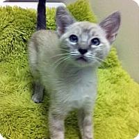 Adopt A Pet :: Pearl - Irvine, CA