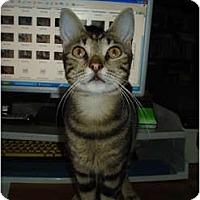 Adopt A Pet :: Tiger - Chesapeake, VA