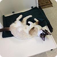 Adopt A Pet :: Faith - San Fernando Valley, CA