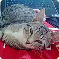 Adopt A Pet :: Daniella - St. Louis, MO