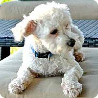 Adopt A Pet :: ARCHIE - Mission Viejo, CA