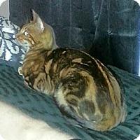 Adopt A Pet :: Kabuki - Davis, CA