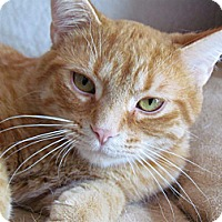 Adopt A Pet :: Rusty - Douglas, ON