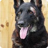 Adopt A Pet :: Shotzy - Inverness, FL