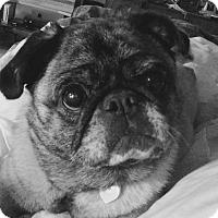 Adopt A Pet :: Molly - Hinckley, MN