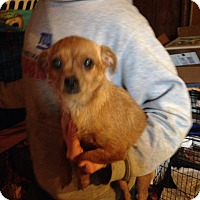 Adopt A Pet :: Gypsy - Albert Lea, MN