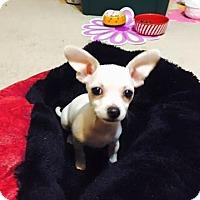 Adopt A Pet :: Chloe - Las Vegas, NV