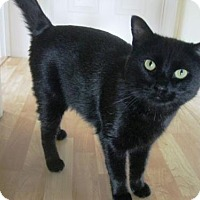 Adopt A Pet :: Guinness - New Hartford, NY