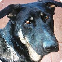 Adopt A Pet :: SHADOW VON SELIG - Los Angeles, CA