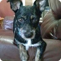 Adopt A Pet :: Bobby - Holmes Beach, FL