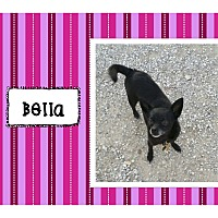 Adopt A Pet :: Bella - Graford, TX