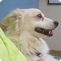 Adopt A Pet :: Laddie of Cincinnati, OH - Lindsey, OH