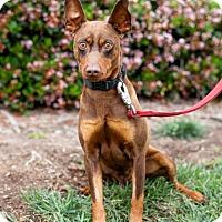 Adopt A Pet :: Skelton - San Diego, CA