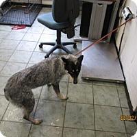 Adopt A Pet :: Aliza - Weatherford, TX