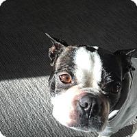Adopt A Pet :: Rumi - San Francisco, CA