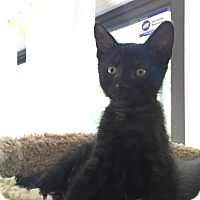 Adopt A Pet :: Slash - Richmond, VA