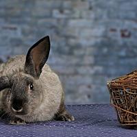Adopt A Pet :: Poncho - Marietta, GA