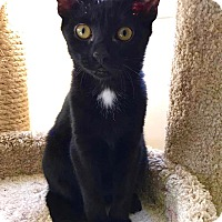 Adopt A Pet :: Brissa - Smithtown, NY