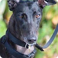 Adopt A Pet :: Lars - Nashville, TN