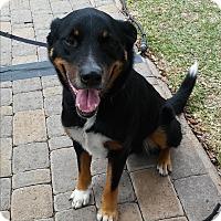 Adopt A Pet :: T.J. - Spring, TX