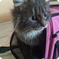 Adopt A Pet :: Farah - Okotoks, AB