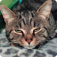 Adopt A Pet :: Clyde - Breinigsville, PA