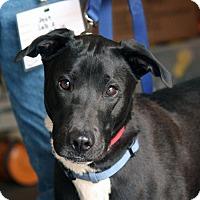 Adopt A Pet :: Jett - Palmdale, CA