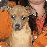 Adopt A Pet :: Omar - Salem, NH