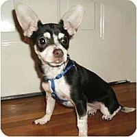 Adopt A Pet :: Clara - Mooy, AL