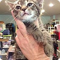 Adopt A Pet :: Zagreb - Byron Center, MI
