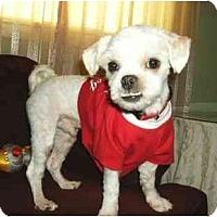 Adopt A Pet :: Henry - Mooy, AL