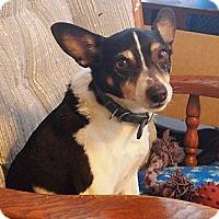 Adopt A Pet :: Buddy - Prole, IA