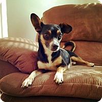 Adopt A Pet :: Peanut - Huntsville, AL