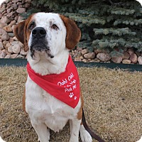 Adopt A Pet :: Martin - Denver, CO