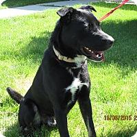 Adopt A Pet :: Otis - Buffalo, WY