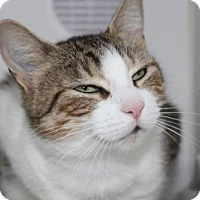Adopt A Pet :: Teena - Hamilton, ON