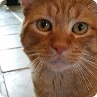Adopt A Pet :: Irish - Walnut Creek, CA