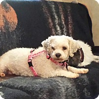 Adopt A Pet :: Freckles - Schofield, WI