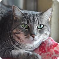 Adopt A Pet :: Nani - Riverside, CA