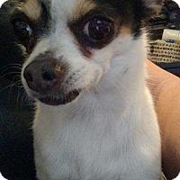 Adopt A Pet :: Lucas - San Diego, CA