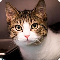 Adopt A Pet :: Rusty - Chestertown, MD