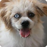 Adopt A Pet :: Mollie - Canoga Park, CA