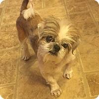 Adopt A Pet :: Wilfred - Newtown, CT
