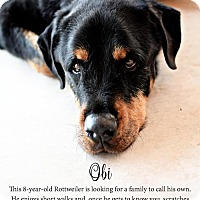 Rottweiler Mix Dog for adoption in Tucson, Arizona - Obi / Courtesy Posting