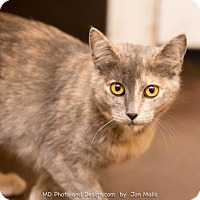 Adopt A Pet :: Abbey - Scottsdale, AZ